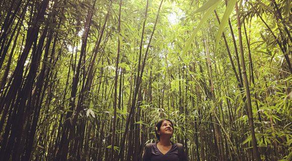 Tour de experiência no Havaí: Yoga na Floresta
