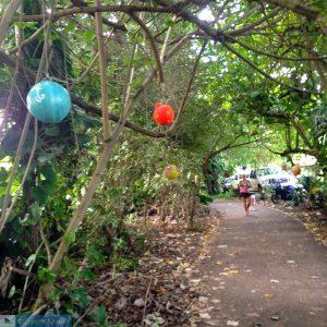 Ciclovia - North Shore de Oahu