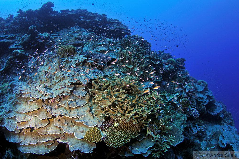 Recife de coral - Wallis & Futuna