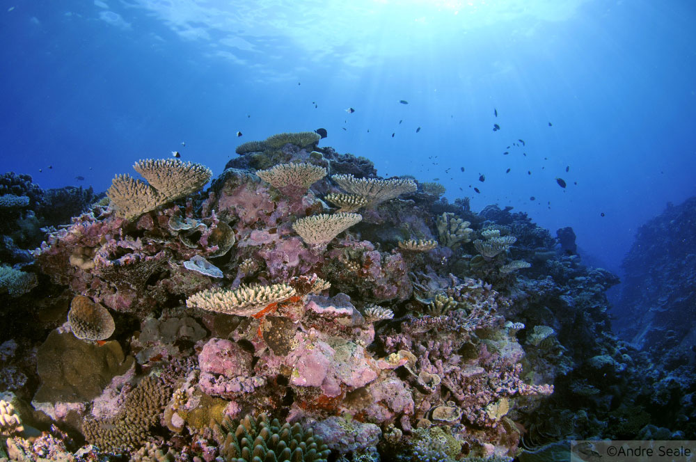 Recife de coral saudável - Wallis & Futuna