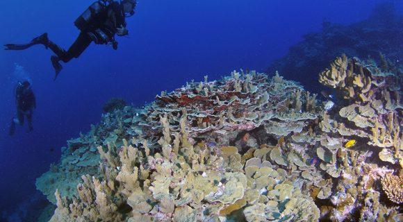 Sexta Sub: Parte 3 – O mergulho em Wallis & Futuna