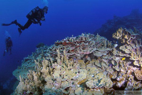 Mergulho em Wallis Island - Wallis & Futuna