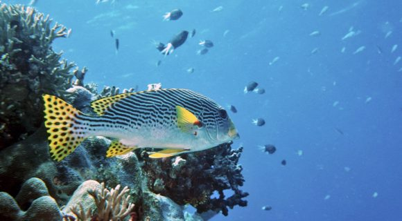 Sexta Sub: Grande Barreira de Corais na berlinda