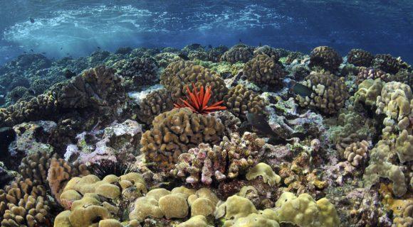 Sexta Sub: venha logo visitar os corais do Havaí
