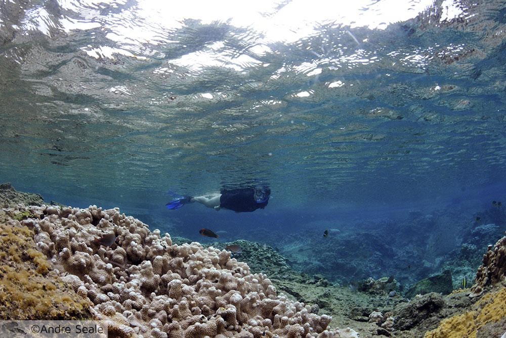 Snorkeler em Waiopae - Big Island do Havaí