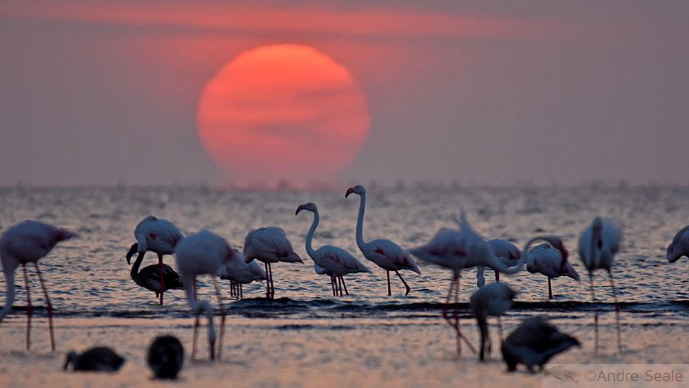Flamingos ao por do sol - Walvis Bay