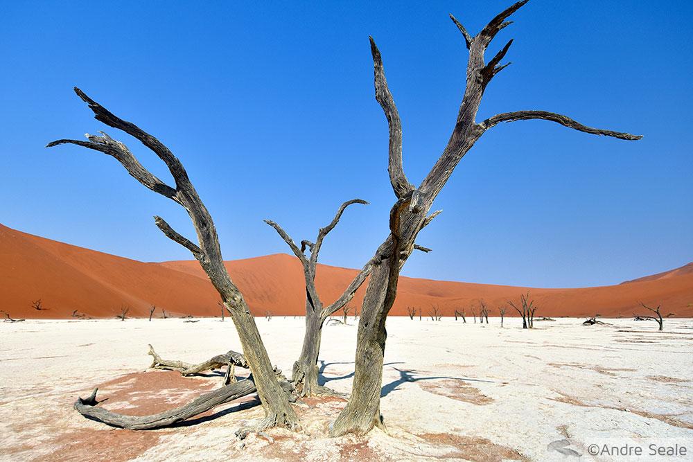 Deadvlei - Roteiro na Namíbia