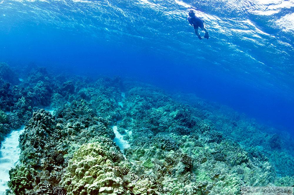 Snorkel em Molokai - Havaí