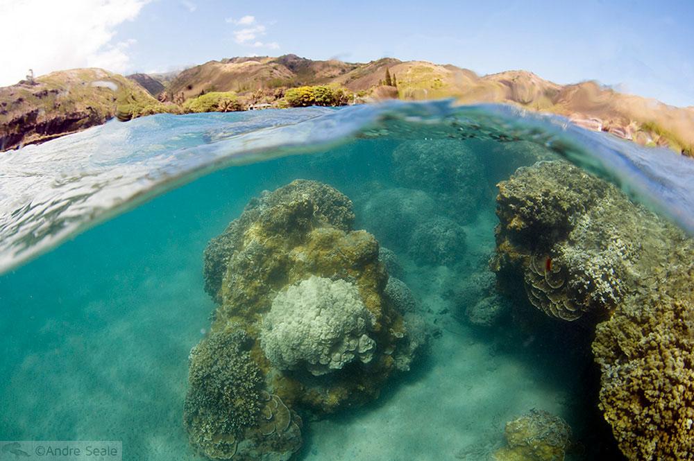 Snorkel em Molokai