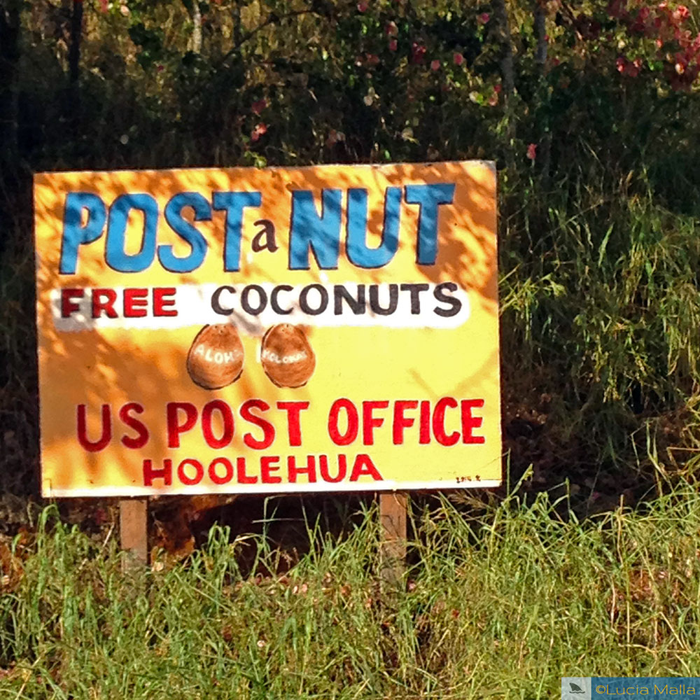 Post a nut - Molokai - Havaí