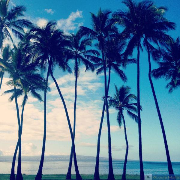 3 dias em molokai