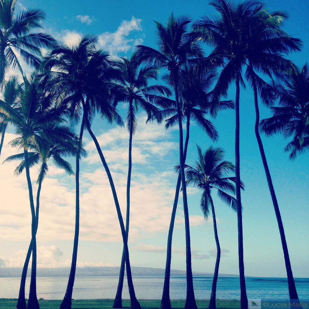 3 dias em molokai - One Alii Park - Havaí