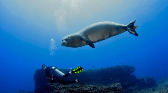 Sexta Sub: snorkel e mergulho em Niihau no Havaí