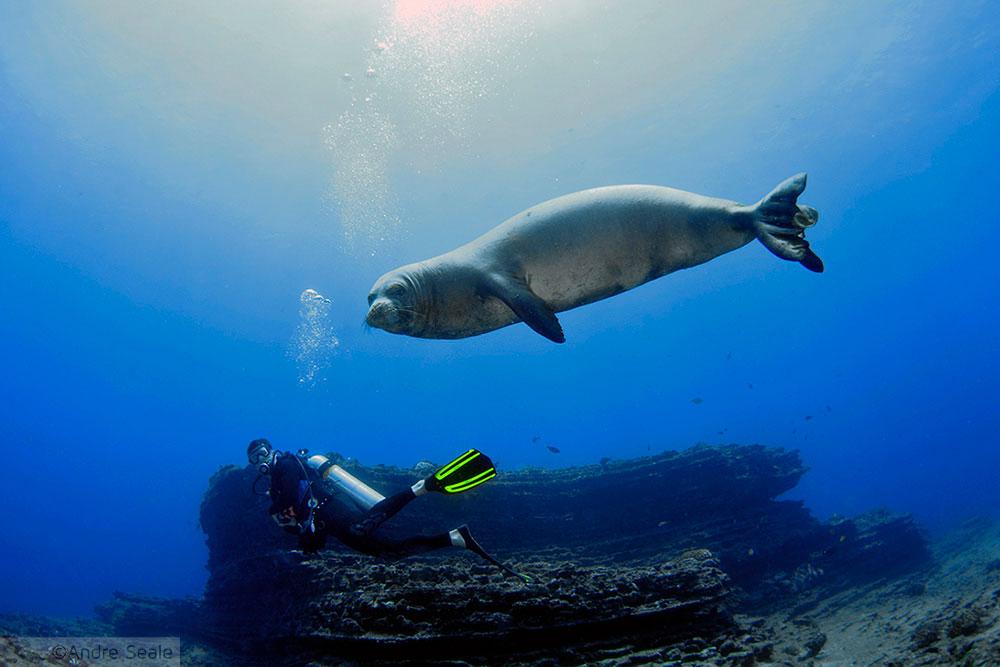 Sexta Sub - snorkel e mergulho em Niihau