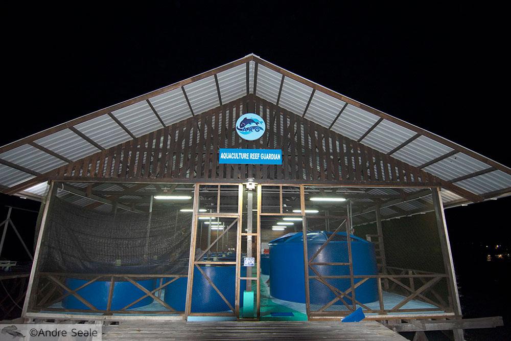 Aquaculture Reef Station - Kapalai Dive resort - Malásia
