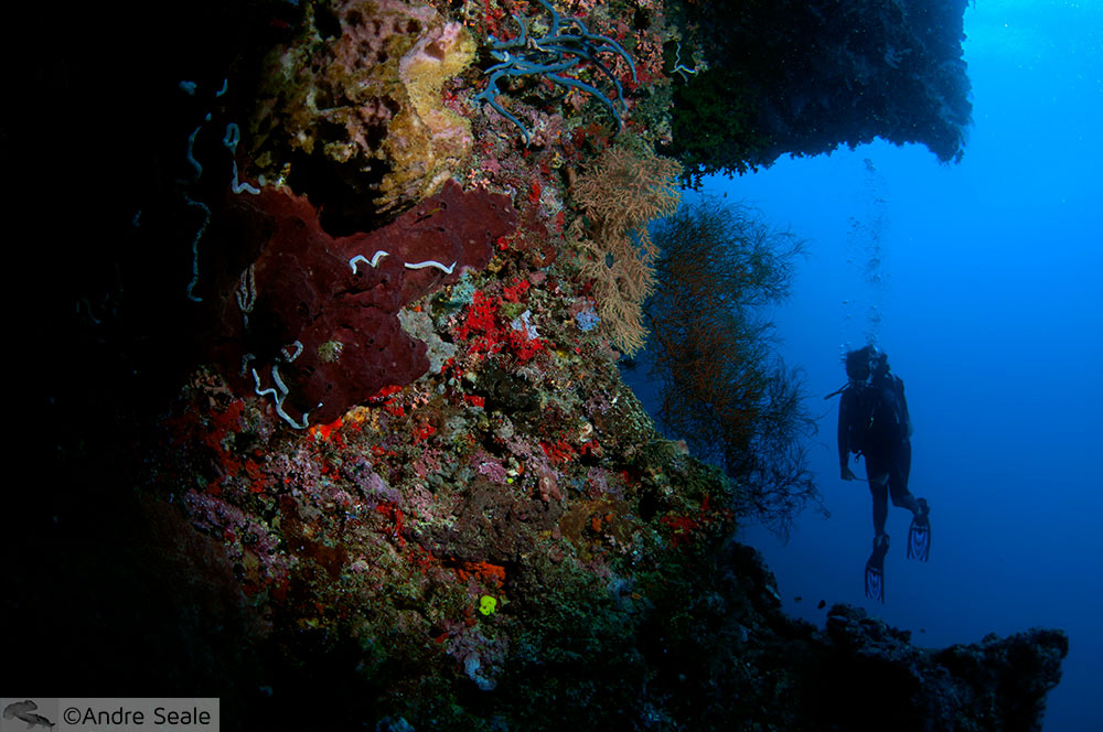 Recife de coral - Sipadan - Malásia