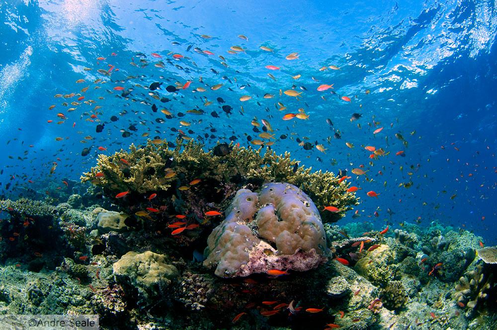 Coral saudável - Sipadan - Malásia