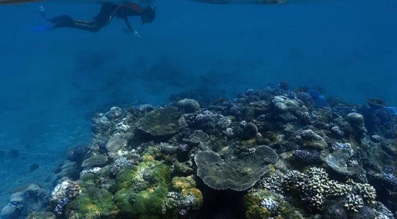 Grandes Points de mergulho – Atol de Rongelap