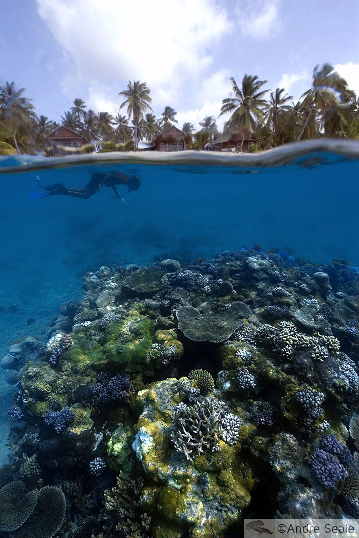Grandes Points de mergulho - atol de Rongelap