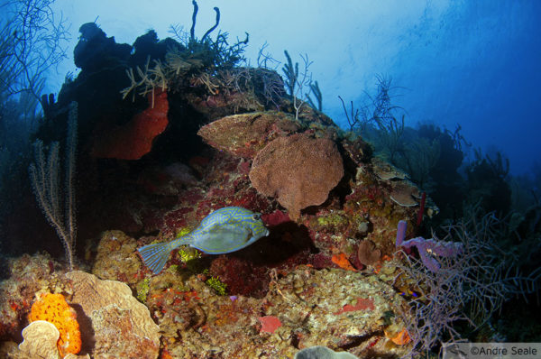 Grande Barreira de Corais de Belize