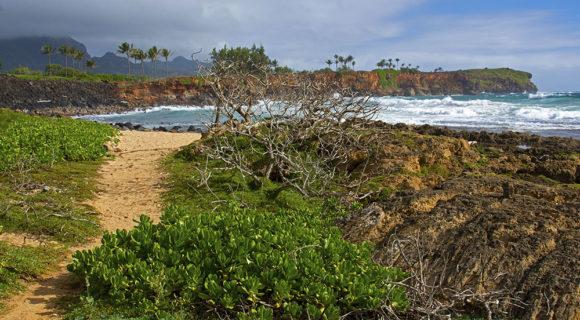 Pela trilha de Mahaulepu no Kauai