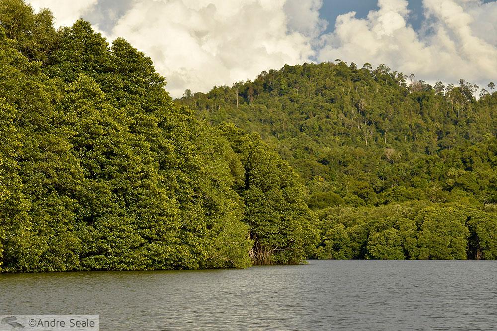 Roteiro em Brunei - Parque Ulu Temburong
