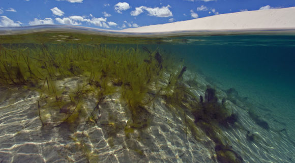 Sexta Sub: Snorkel nos Lençóis Maranhenses