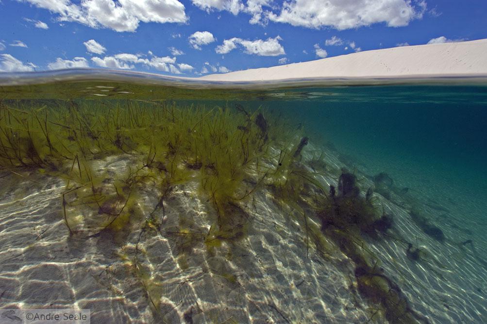 Snorkel nos Lençóis Maranhenses