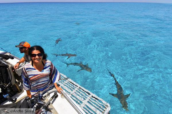 15 anos de blog - tubarões nas Bahamas