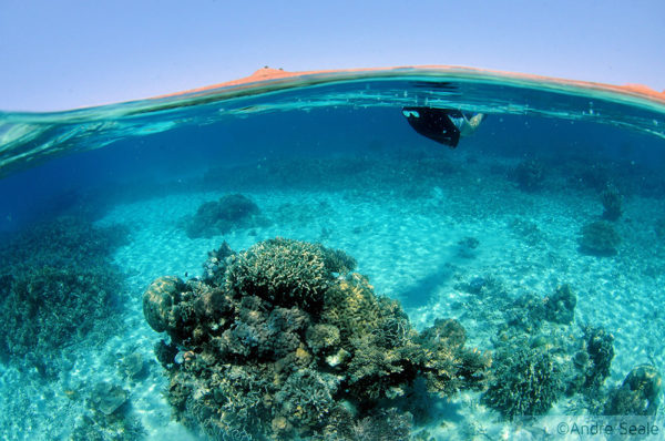 15 anos de blog - snorkel em Komodo