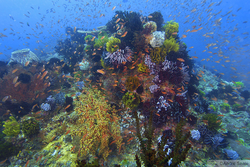 Recife de coral saudável - sobre microbioma, simbiose e disbiose