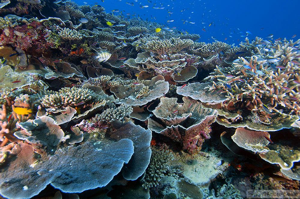 Mergulho na Grande Barreira de Corais - Austrália