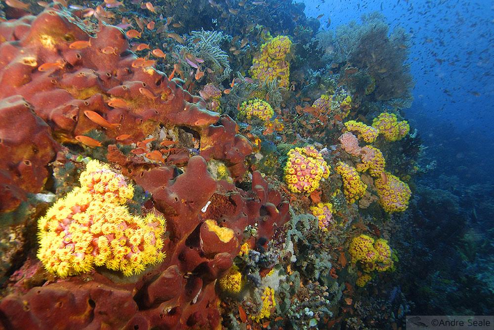 Mergulho pelo mundo - Filipinas