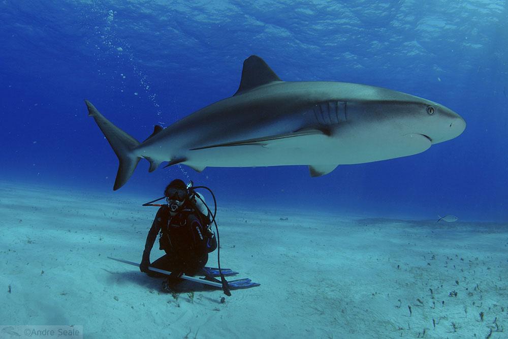 Mergulhadora e tubarão